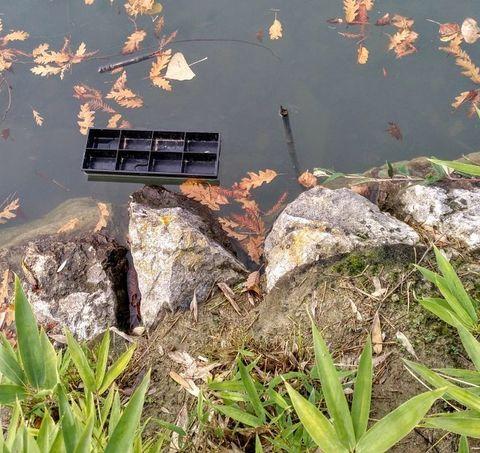 Estudiar en biología las especies que habitan en el lago y diseñar un plan de sensibilización para el barrio de Mendillorri